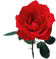 Administrative Professionals: A Rose is a Rose is A Rose?