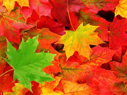 12 Workplace Practices to Make the Best of Autumn